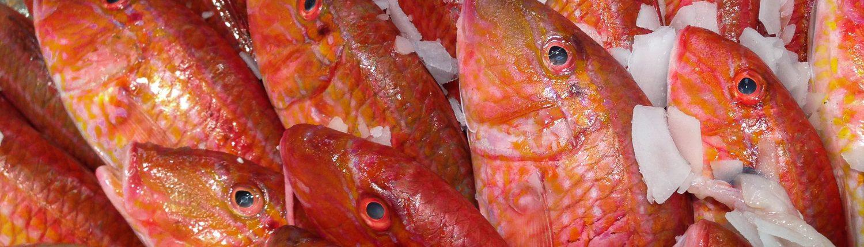 pescaderiaslosmadrileños